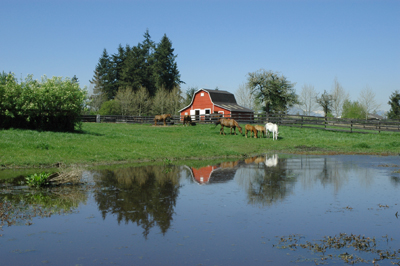 Fort Langley Farm